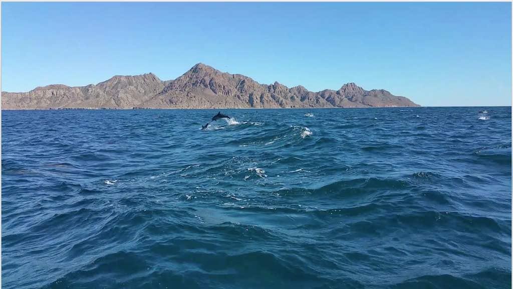 Villa del Palmar Loreto, Mexico Dolphins
