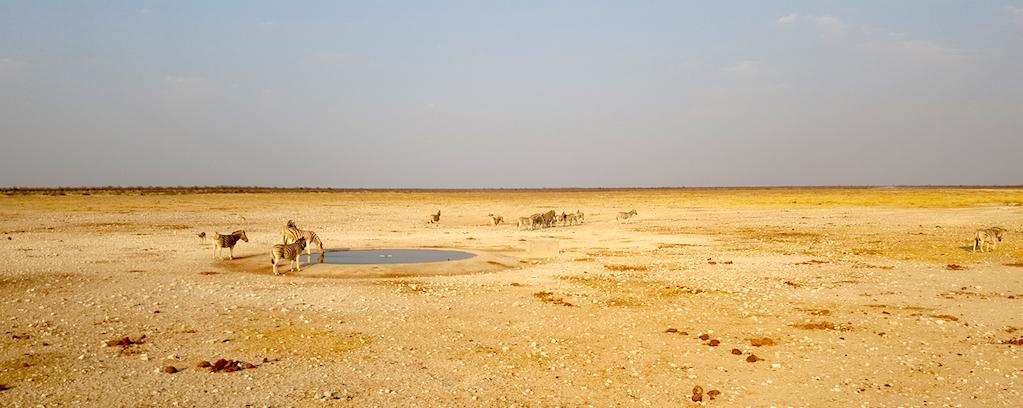 Wild Dog Safaris - Etosha National Park. Namibia-Animals at the watering hole