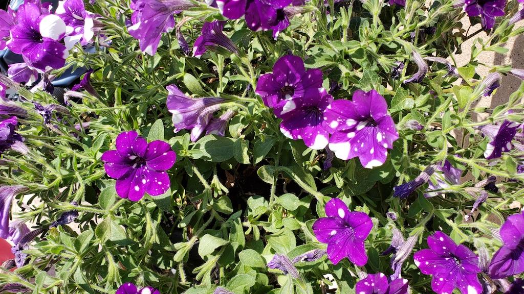 Karlštejn Castle - Flowers
